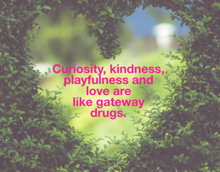 Curiosity, kindness, playfulness and love are like gateway drugs